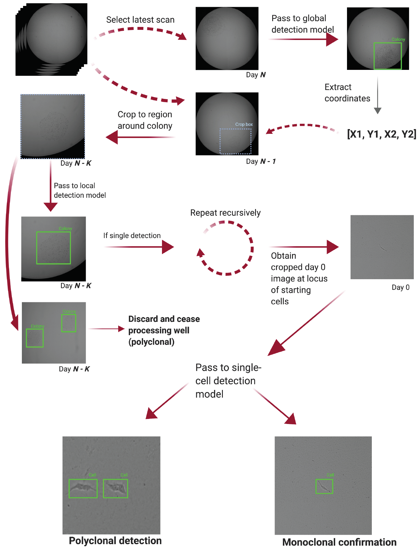 Schematic representing a broad overview of Monoqlo's design and algorithmic logic