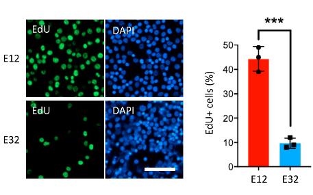 Cell Proliferation Assay